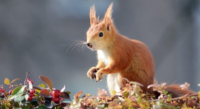 природа Запитання-цікавинка: Що / хто ставиться до тварин?