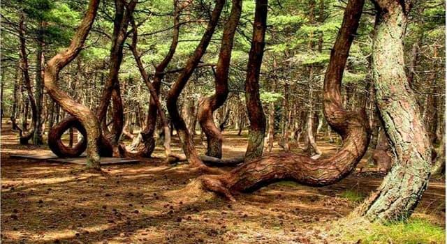 """Geographie Wissensfrage: Wo befindet sich """"Der tanzende Wald""""?"""