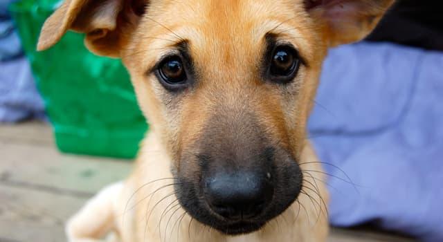 natura Pytanie-Ciekawostka: Która rasa psa jest jedną z najmniej licznych?