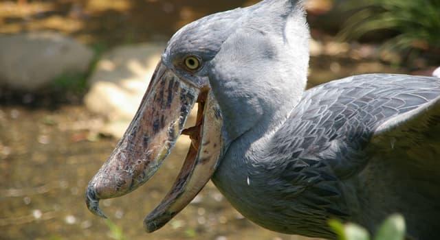 natura Pytanie-Ciekawostka: Jaki gatunek ptaka przedstawiono na zdjęciu?