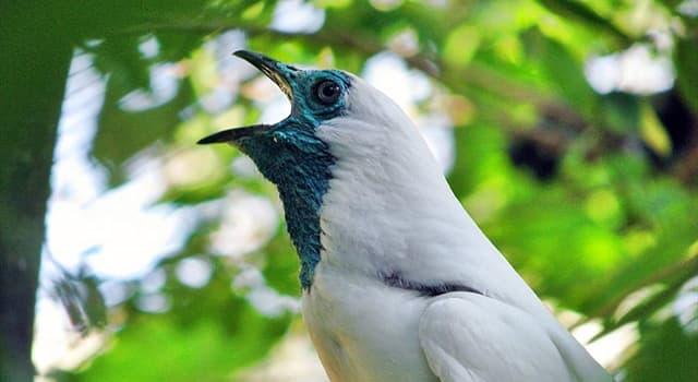 природа Запитання-цікавинка: Яка птах зображений на фото?