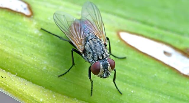 natura Pytanie-Ciekawostka: Która z tych much nie istnieje?