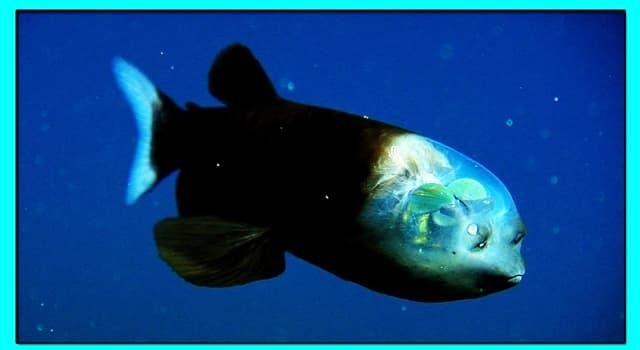 природа Запитання-цікавинка: Чи існує насправді в природі риба, зображена на фото?