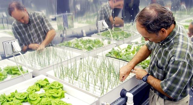 nauka Pytanie-Ciekawostka: Jaki termin opisuje uprawę roślin w rolnictwie bez użycia gleby?