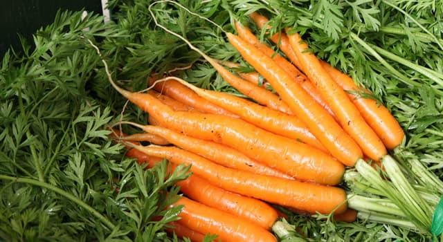 Natur Wissensfrage: An welchem Farbstoff ist die Karotte reich?