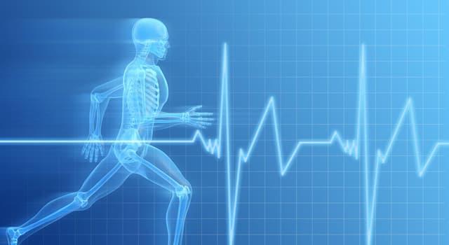 Наука Запитання-цікавинка: Що є найбільшою залозою в організмі людини?