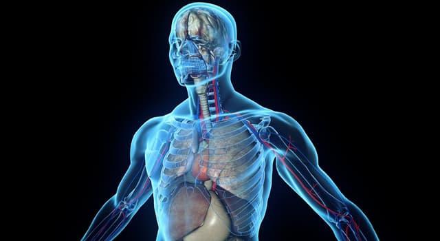 Наука Запитання-цікавинка: Де в організмі людини можна знайти меніск?