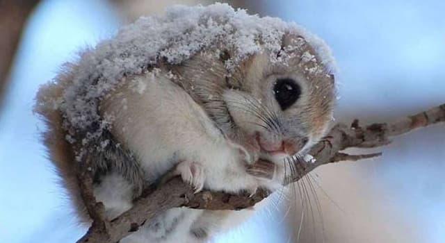 natura Pytanie-Ciekawostka: Ile gatunków wiewiórki jest na świecie?