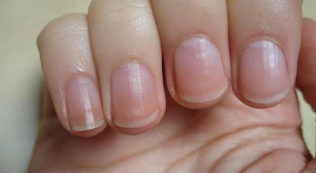 Наука Запитання-цікавинка: З чого складаються нігті людини?