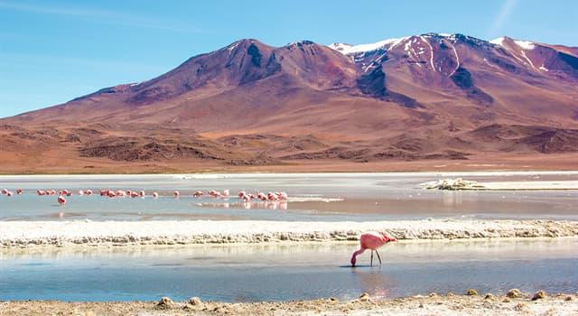 Geographie Wissensfrage: Die Hauptstadt Boliviens ist...