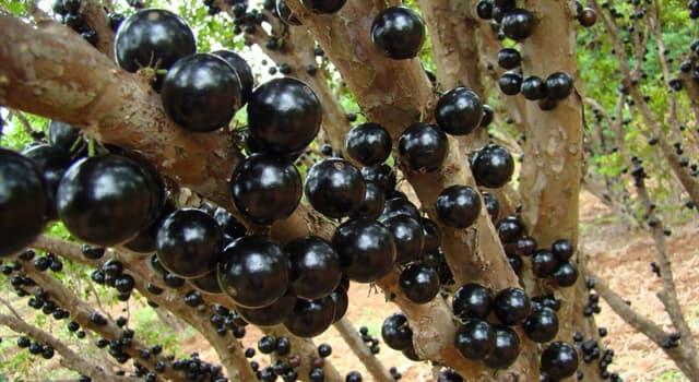 природа Запитання-цікавинка: Плоди якої рослини зображені на фото?