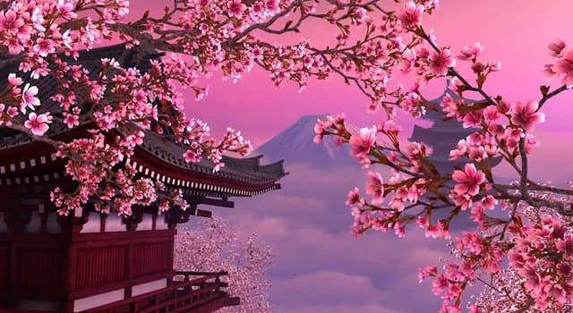 природа Запитання-цікавинка: Сакура - це назва декількох дерев підродини сливові, але найчастіше позначає яке дерево?