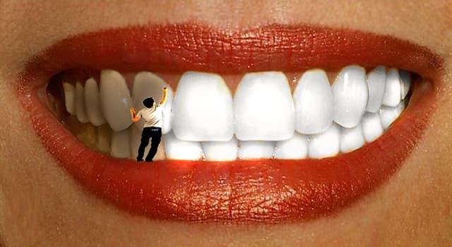 Наука Запитання-цікавинка: Скільки типів зубів існує у людини?