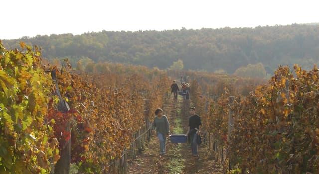 """Kultur Wissensfrage: Aus welcher ungarischen Stadt stammt der Wein """"Der Egri Bikavér"""", besser bekannt als """"Stierblut""""?"""