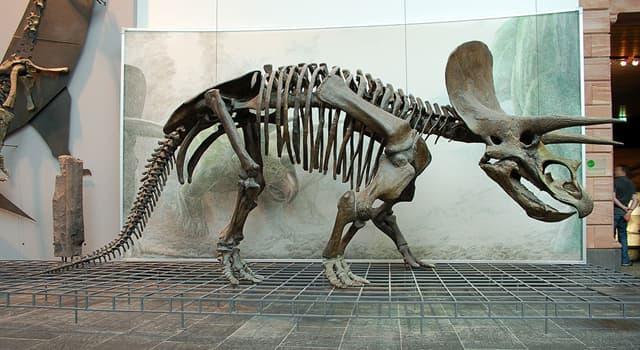 """Natur Wissensfrage: Warum wurde dieser Dinosaurier """"Triceratops"""" genannt?"""