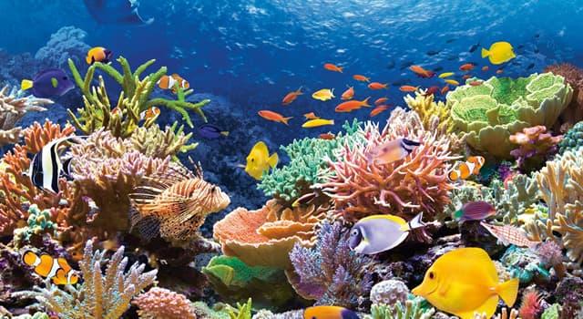 Wissenschaft Wissensfrage: Welche Wissenschaft befasst sich mit der Pflanzen- und Tierwelt in Meeren und Ozeanen?