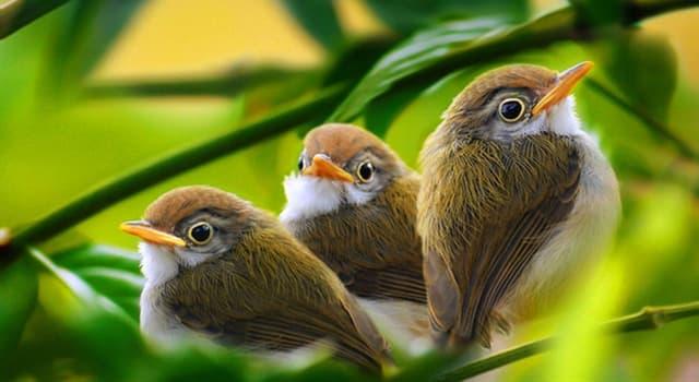 Natur Wissensfrage: Welcher von diesen Vögeln ist giftig?