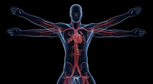 Наука Запитання-цікавинка: Де в організмі людини знаходиться плюсна?