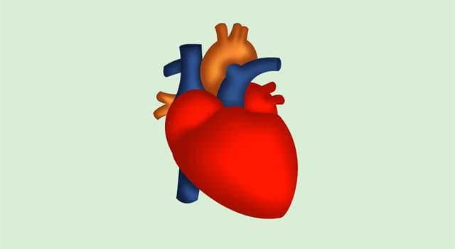 Наука Запитання-цікавинка: Зі скількох шарів складається стінка серця?