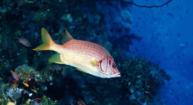 Natur Wissensfrage: Wie bestimmt man das Alter eines Fisches?