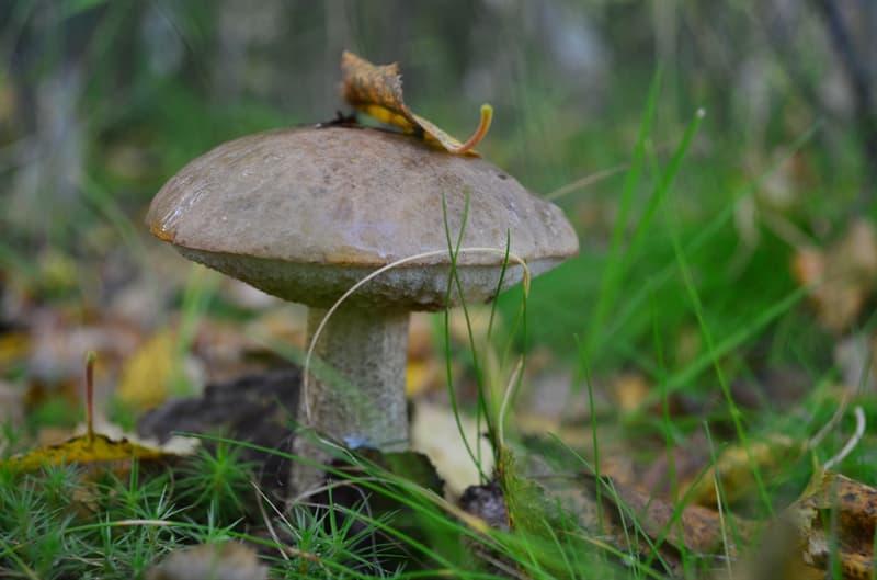 природа Запитання-цікавинка: Який гриб зображений на фото?
