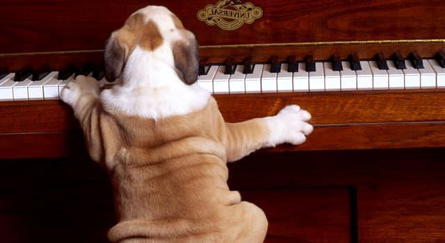 """Культура Запитання-цікавинка: Хто є автором п'єси для фортепіано """"Собачий вальс""""?"""