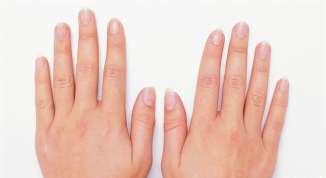 Наука Запитання-цікавинка: Чи правда, що нігті на руках і ногах ростуть з однаковою швидкістю?