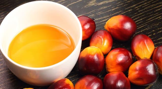 Wissenschaft Wissensfrage: Stimmt es, dass Palmöl ganz ungesund ist?