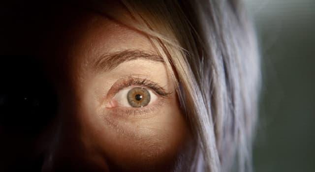 """Наука Запитання-цікавинка: При нестачі якого вітаміну розвивається """"куряча сліпота""""?"""
