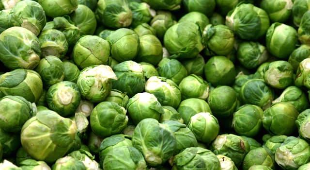 природа Запитання-цікавинка: В якій країні була виведена брюссельська капуста?