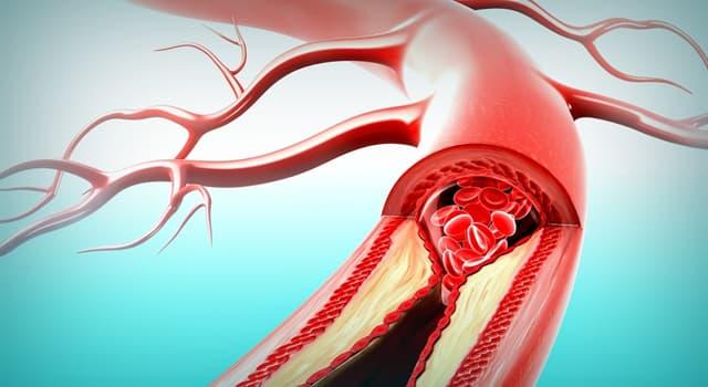 Wissenschaft Wissensfrage: Welche große Arterie befindet sich bei dem Oberschenkelknochen?