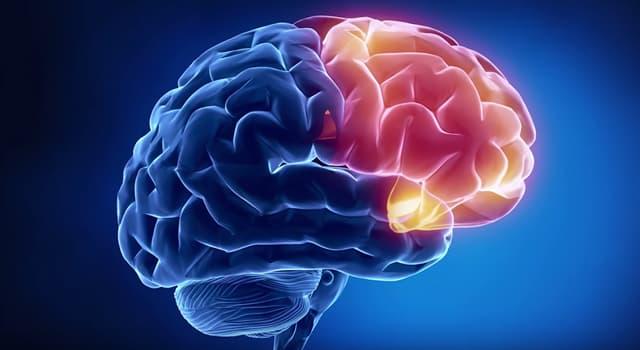 Наука Запитання-цікавинка: Що є причиною болю в голові, якщо мозок не відчуває біль?