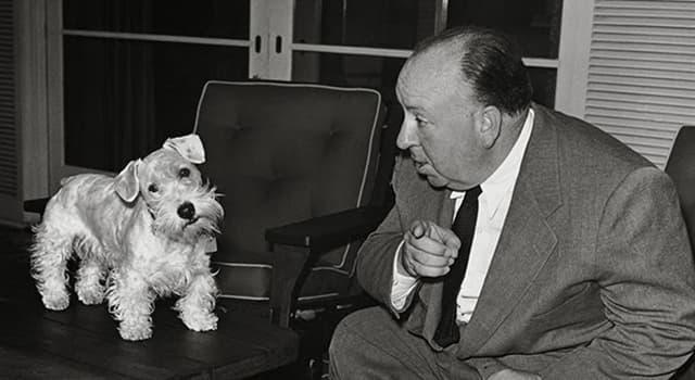 natura Pytanie-Ciekawostka: Z jakiego kraju pochodzi rasa Sealyham Terrier?
