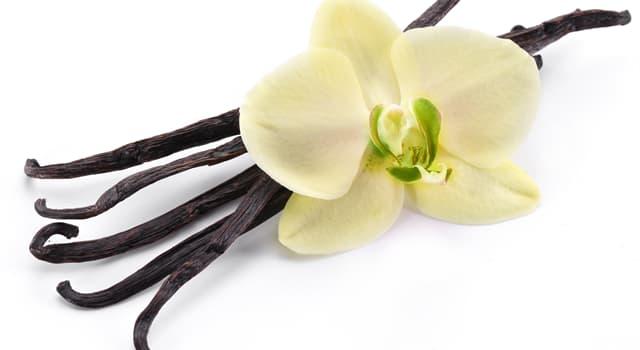 природа Запитання-цікавинка: З рослини якого сімейства отримують ваніль?