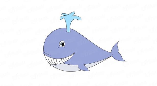 природа Запитання-цікавинка: Як називається дихальний отвір у китоподібних, що знаходиться, як правило, на самому верху голови?