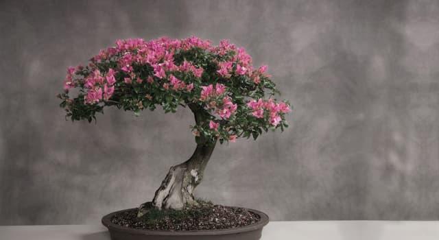 Культура Запитання-цікавинка: Як називається мистецтво вирощування точної копії справжнього дерева в мініатюрі?