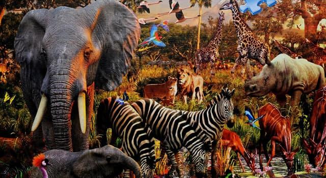 природа Запитання-цікавинка: Яке з перерахованих тварин найбільш давнє?