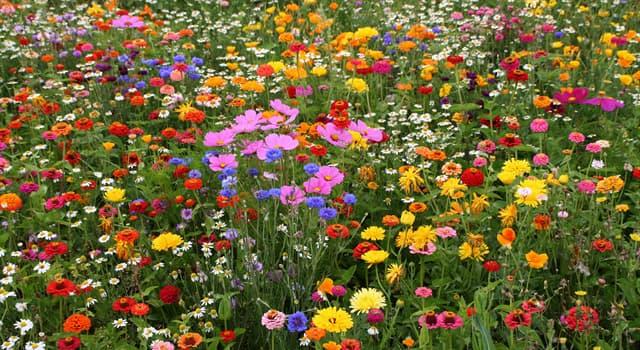 природа Запитання-цікавинка: Якого кольору квітка льону?