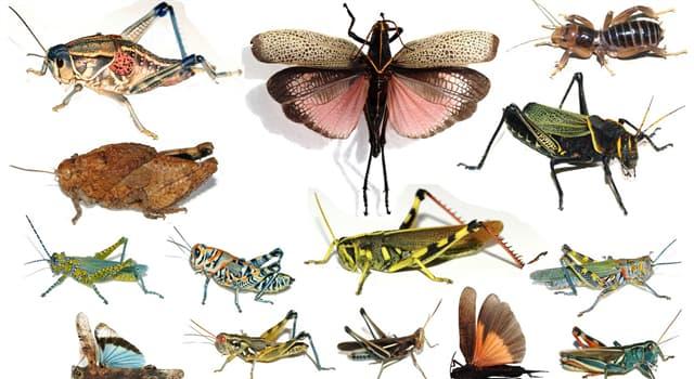 """natura Pytanie-Ciekawostka: Które z nich są również znane jako """"białe mrówki""""?"""