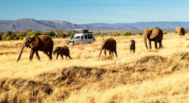 społeczeństwo Pytanie-Ciekawostka: W którym kraju znajduje się sierociniec słoni Davida Sheldricka?
