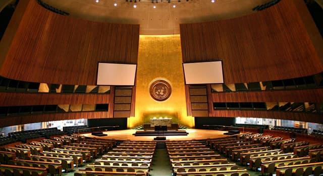 społeczeństwo Pytanie-Ciekawostka: Gałąź którego drzewa pojawia się na fladze Organizacji Narodów Zjednoczonych?