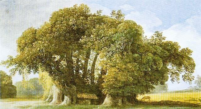 """Geographie Wissensfrage: Wo befindet sich der älteste und der größte Baum der Welt """"Kastanienbaum der hundert Pferde""""?"""