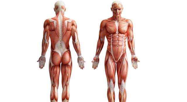 Wissenschaft Wissensfrage: Wo im menschlichen Körper befindet sich Meniskus?