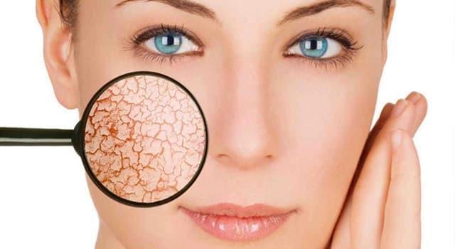 Наука Запитання-цікавинка: Що не входить у функції шкіри?