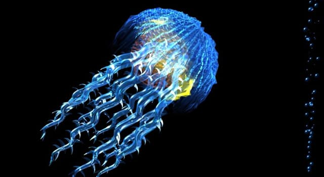 Наука Запитання-цікавинка: Що потрібно робити, якщо вжалила медуза?