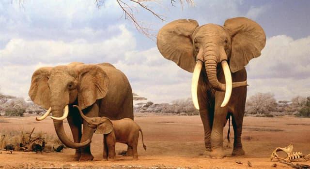 Географія Запитання-цікавинка: Де знаходиться найбільш видовищний національний парк Масаї-Мара?
