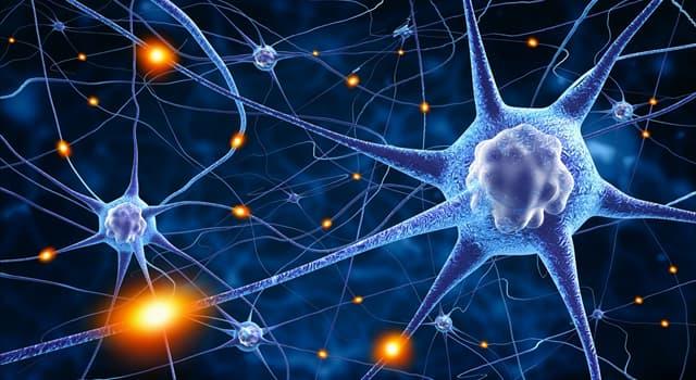 Наука Запитання-цікавинка: Як називаються нервові клітини?