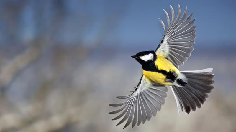 природа Запитання-цікавинка: Як інакше називають переліт птахів на іншу територію?