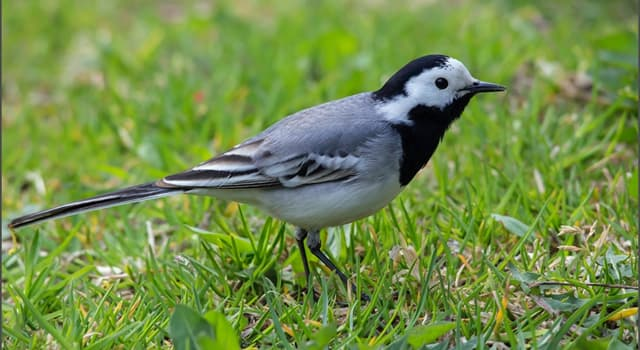 природа Запитання-цікавинка: Яка птах зображений перед вами?
