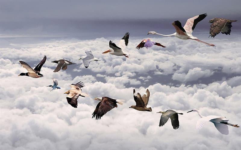 природа Запитання-цікавинка: Яка птах робить міграцію за допомогою перельоту?